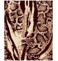 animal skin pattern vector image