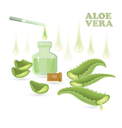 aloe vera leaves vial pipette and drops vector image
