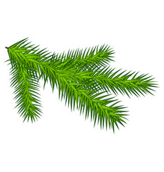 Green juicy one spruce branch vector