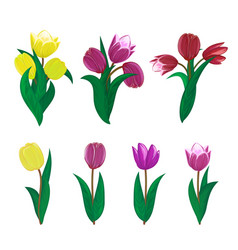 tulips flower spring bouquet floral set with vector image