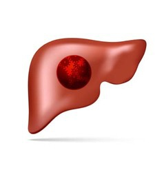 Human liver with gear and cogwheel vector