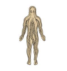 Alien octopus inside human body drawing vector