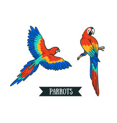 Ara parrot isolated tropical design element birds vector