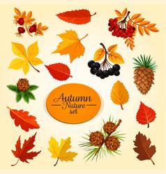 Autumn leaf fruit and berry fall season icon set vector