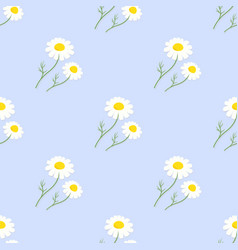 chamomile flowers seamless pattern on blue vector image