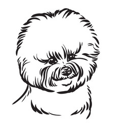 image bishon dog on white background vector image