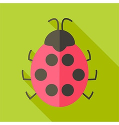 Ladybug insect vector