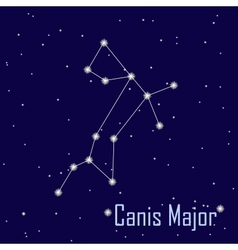 The constellation Canis Major star in the night vector
