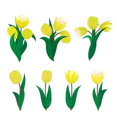 tulips flower spring bouquet floral set vector image