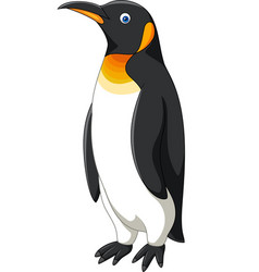 cartoon penguin isolated on white background vector image