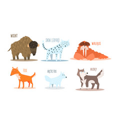 Collection of arctic animals with names wisent vector
