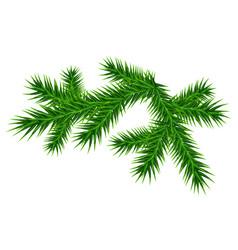 green juicy one pine branch vector image