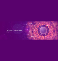 Natural fertilization web banner sperm and egg vector