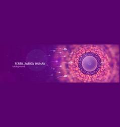 natural fertilization web banner sperm and egg vector image