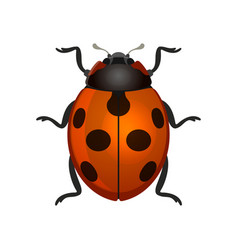 Red ladybug on white background vector
