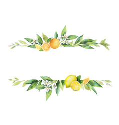 Watercolor banner of citrus fruits and vector