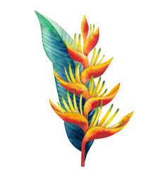 Watercolor heliconia bouquet vector