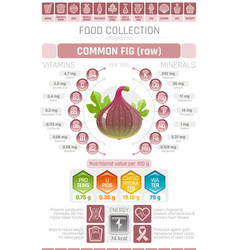food infographics poster fig fruit vector image vector image