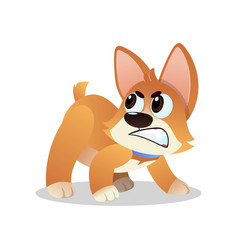 Angry little corgi growling and showing his teeth vector