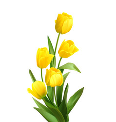 Bouquet spring yellow tulips isolated on white vector