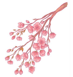 Branch of cherry blossoms with flowers vector