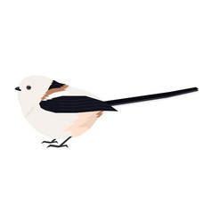 Long-tailed tit vector