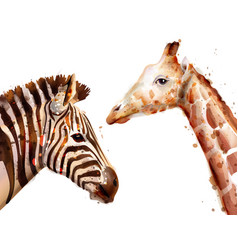 Zebra and giraffe watercolor wildlife vector