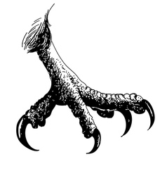claws vector image