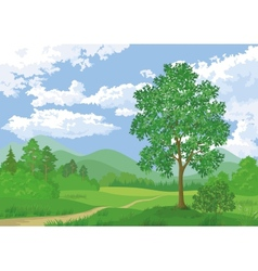 Landscape summer forest and maple tree vector image vector image