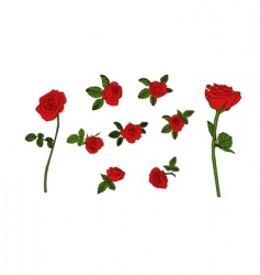 red rose set vector image vector image