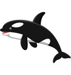 Cartoon orca isolated on white background vector