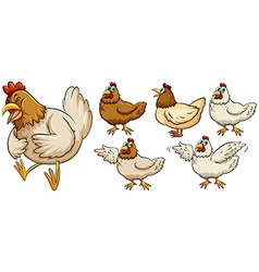Farm chicken in different poses vector