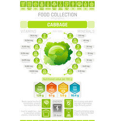 Food infographics poster cabbage vegetable vector