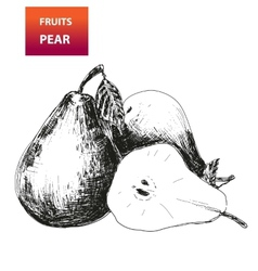 Fruits Pear vector