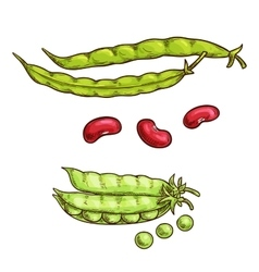 Green pea pod and beans sketch icons vector