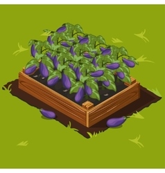 Vegetable Garden Box with Eggplant Set 5 vector