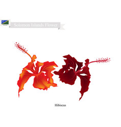 national flower of solomon the hibiscus flowers vector image