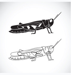 Grasshopper on white background insect animal vector
