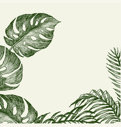 hand drawn branches and leaves of tropical plants vector image