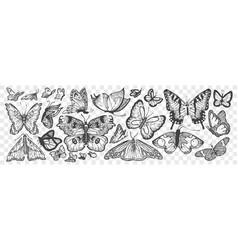 hand drawn butterflies doodle set vector image