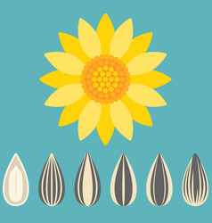 Sunflower and sunflower seed vector