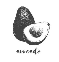 organic avocado fruit vector image vector image