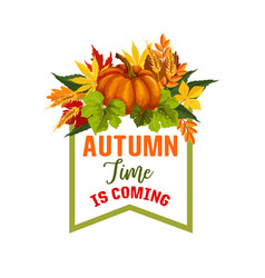 Autumn time maple leaf or pumpkin poster vector