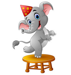 circus elephant cartoon vector image