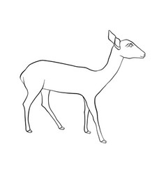 drawing doe vector image