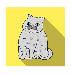 exotic shorthair icon in flat style isolated on vector image