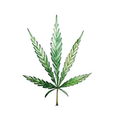 green cannabis leaf for your design projects vector image