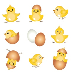 Set easter chicks vector