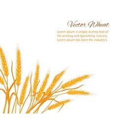 Wheat ear card vector