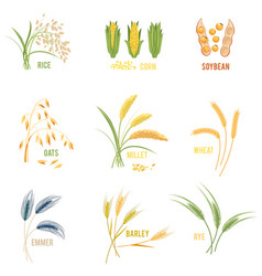 cereal plants icons vector image vector image